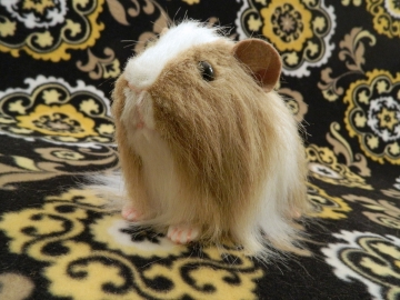 Big Beige Dutch Longhaired Guinea Pig Plushie