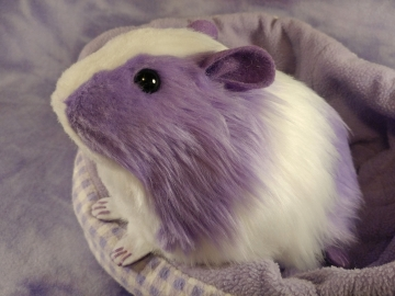 Big Lavender Dutch Guinea Pig Plushie