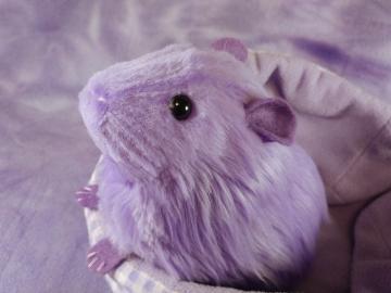 Big Lavender Guinea Pig Plushie